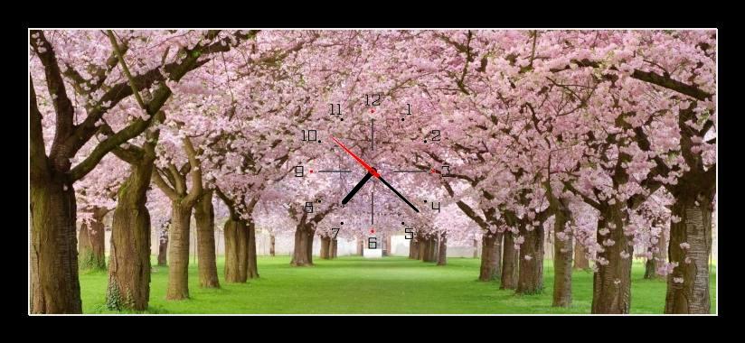 Obraz s hodinami - růžově kvetoucí stromy