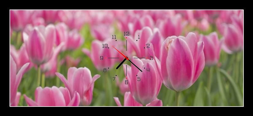 Obraz s hodinami -růžové tulipány