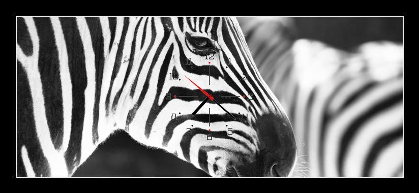 Obraz s hodinami - zebra