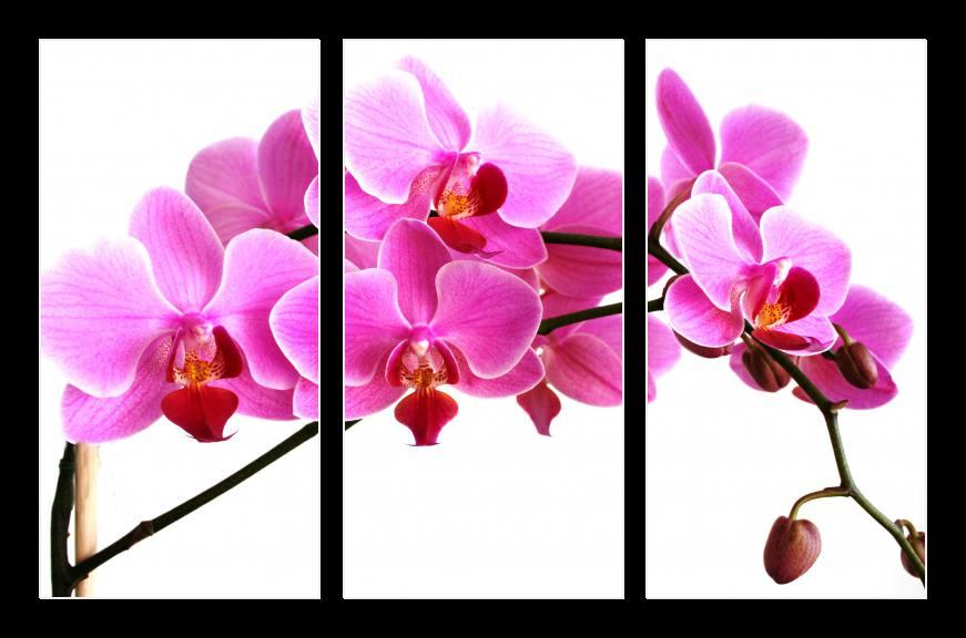 Obraz na zeď orchidej