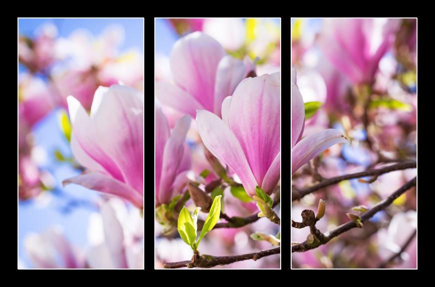 Obraz na zeď magnolie