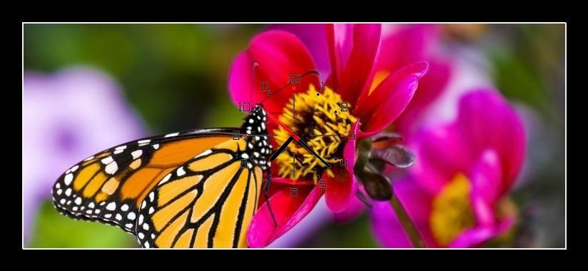 Obraz s hodinami - motýl na květině