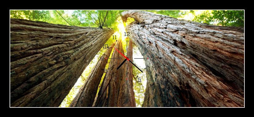 Obraz s hodinami - kmeny stromů