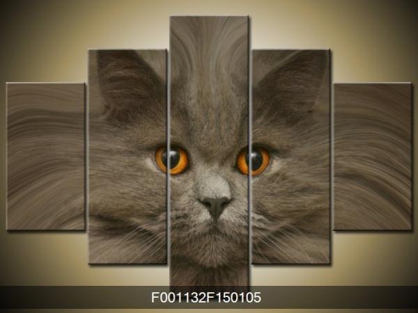 Obraz kočka