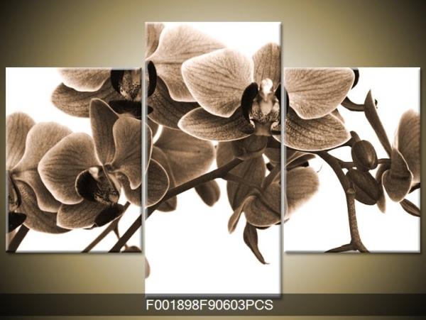 Černobílý obraz orchidee