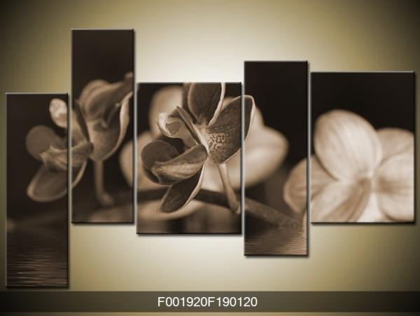 Obraz černobílé orchidee