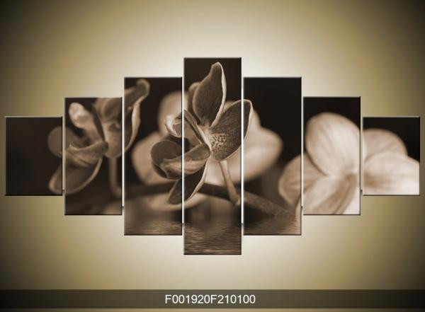 Černobílý obraz květu orchidee
