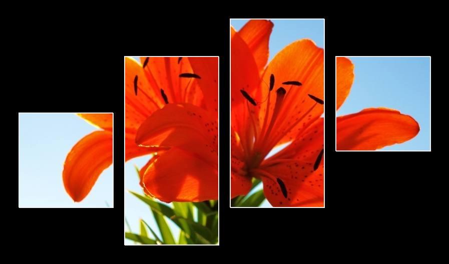 Obraz dvou lilií
