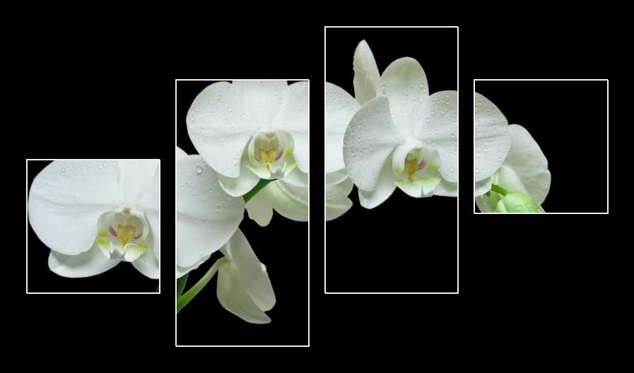 Obraz bílé orchidee
