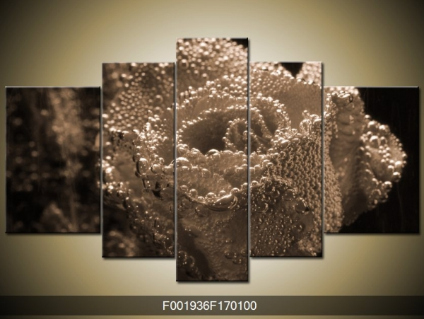 Černobílý obraz orosené růže