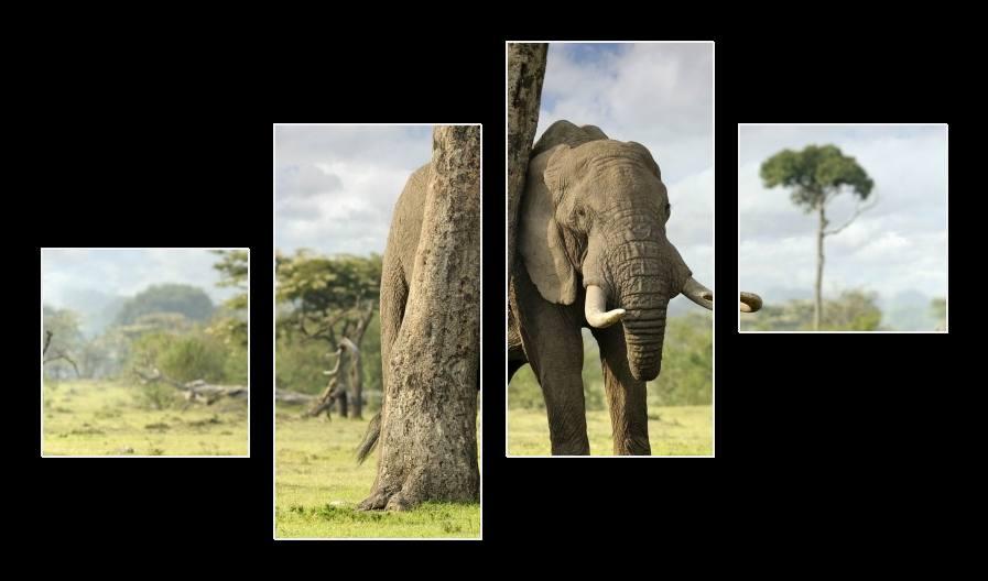 Obraz slona