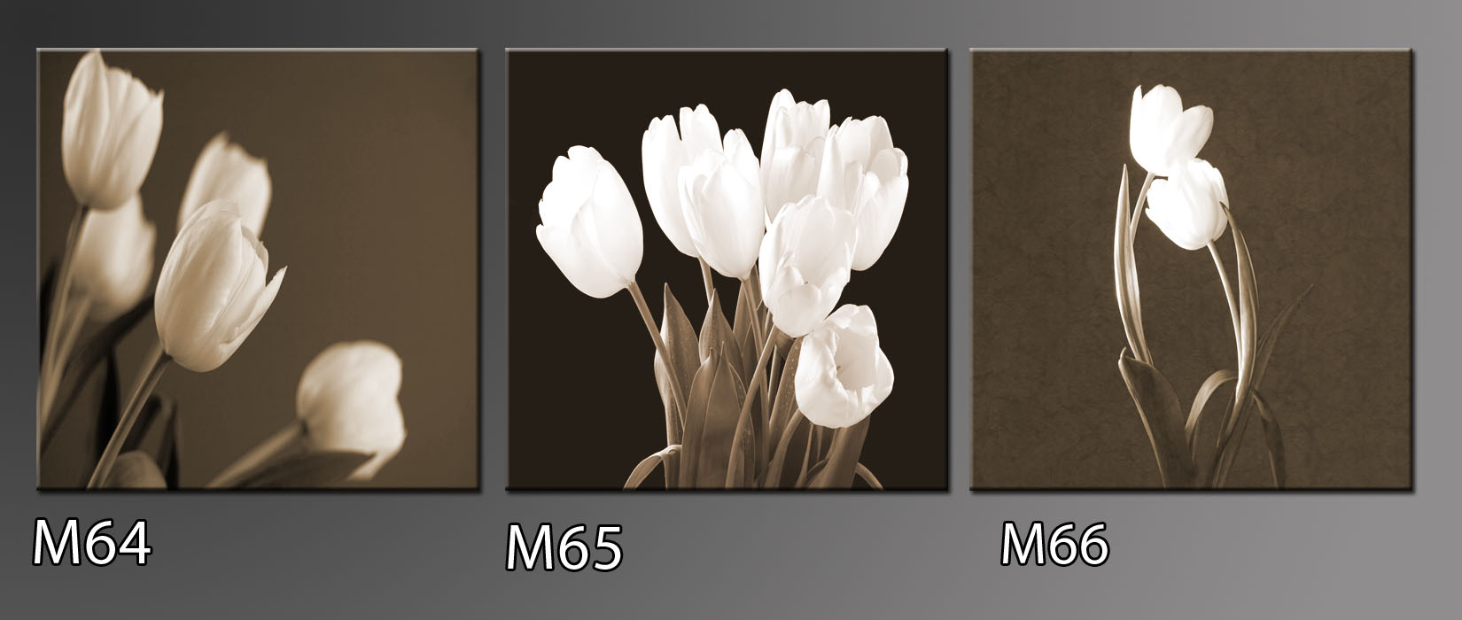 Černobílý obraz tulipánů