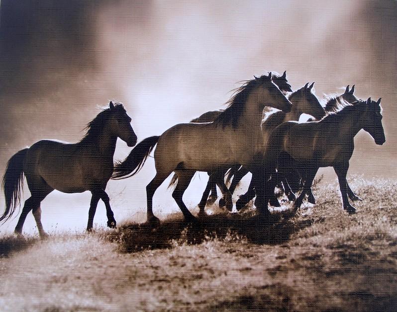 Černobílý obraz běžícího stáda koní
