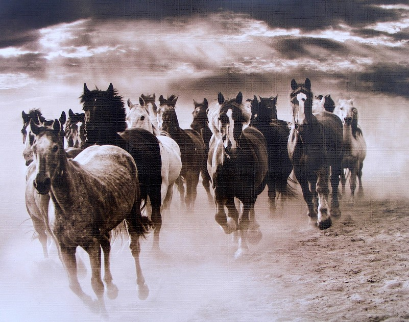 Černobílý obraz stáda koní