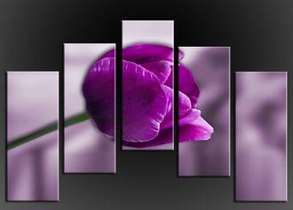 Obraz do bytu fialový tulipán
