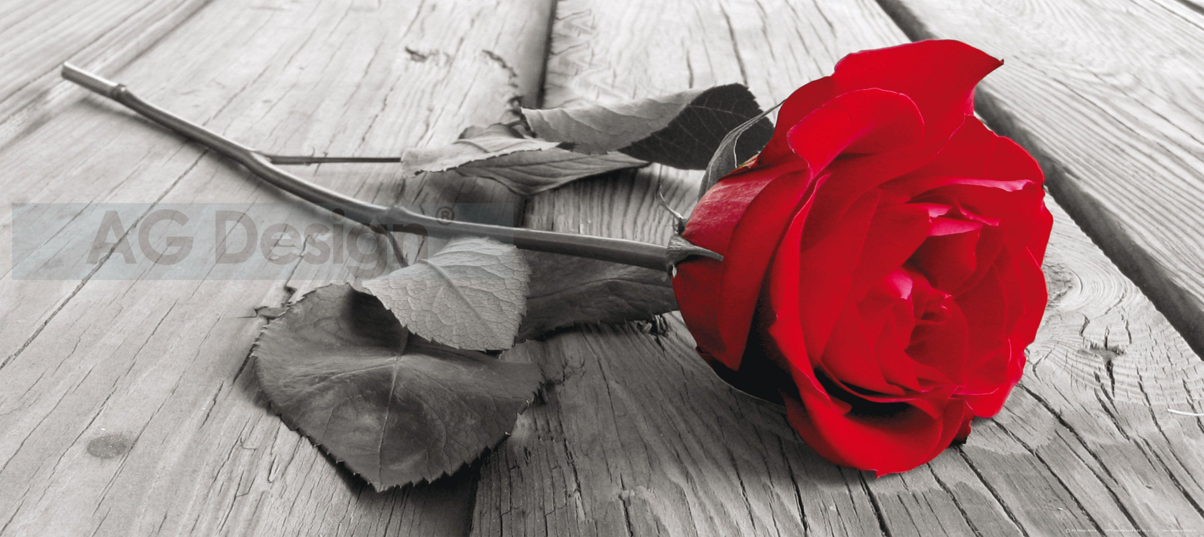 Fototapeta jednodílná - červená růže