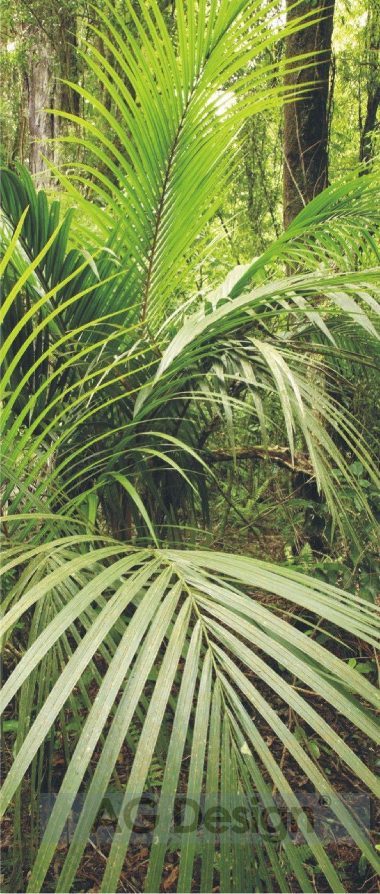 Fototapeta jednodílná - palma