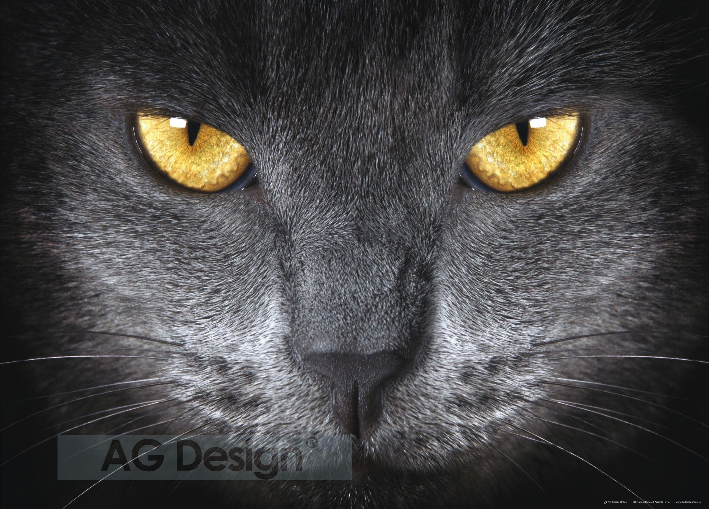 Fototapeta jednodílná - kočka