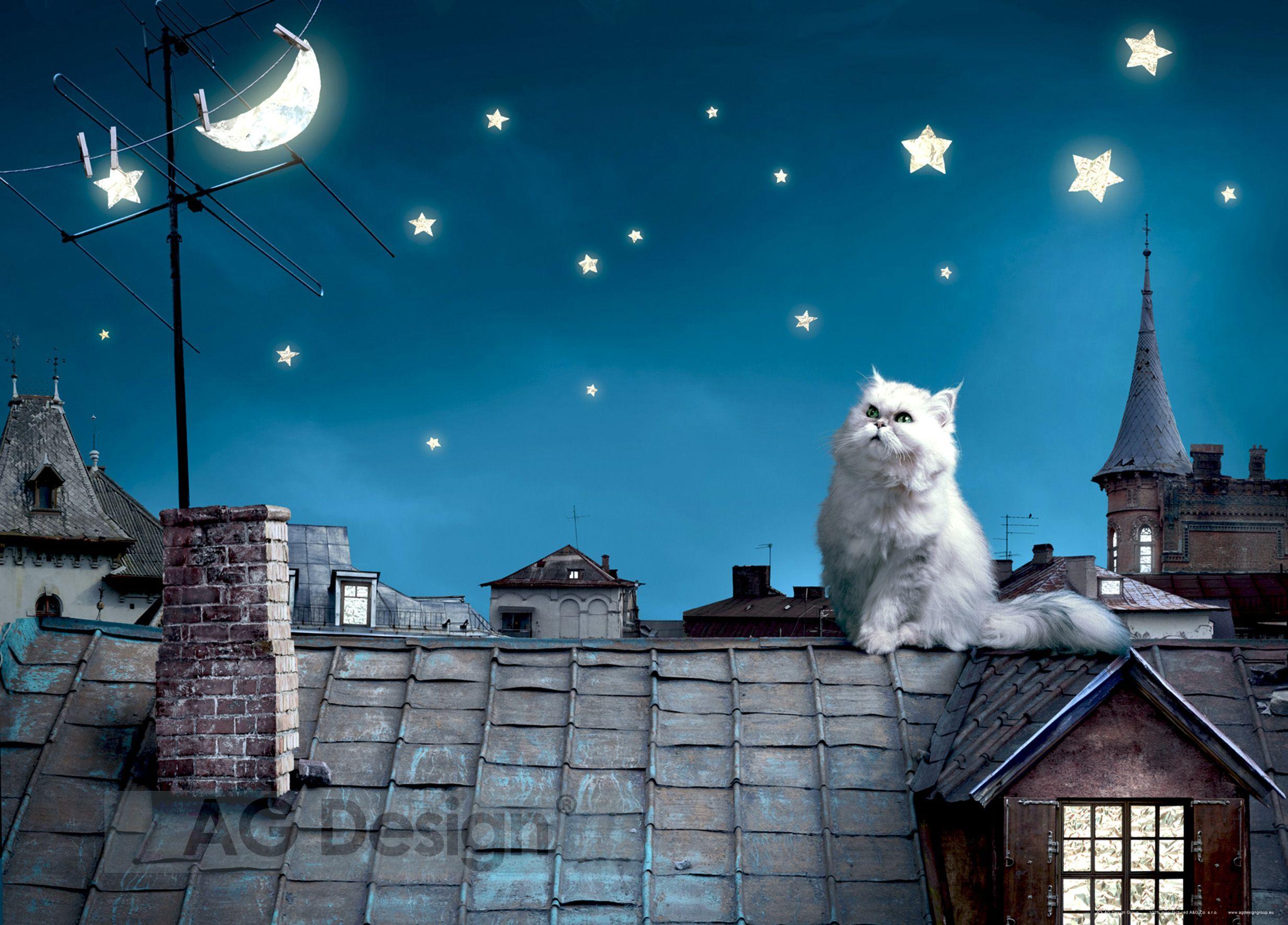 Fototapeta jednodílná - kočka na střeše