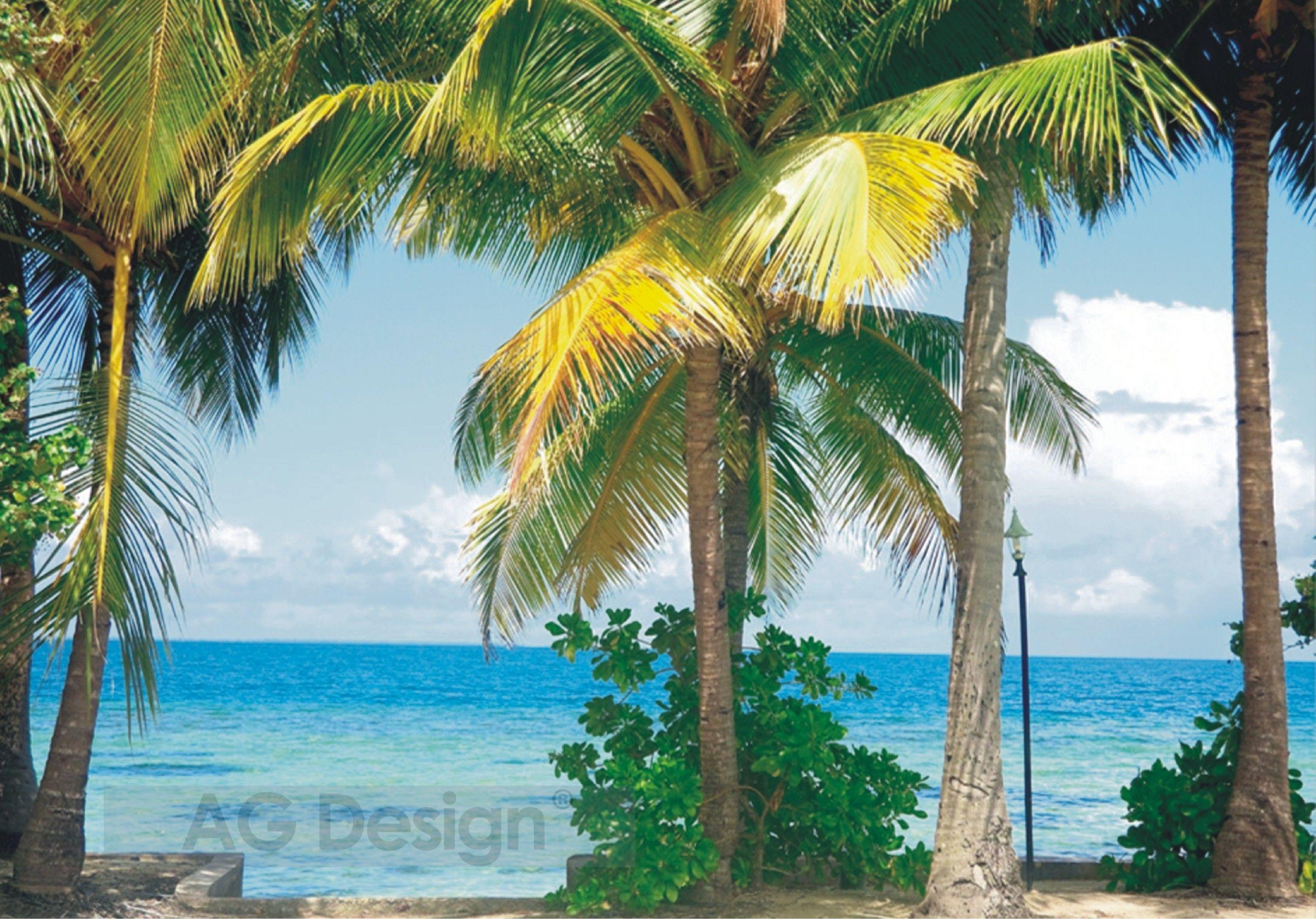 Fototapeta čtyřdílná - palmy