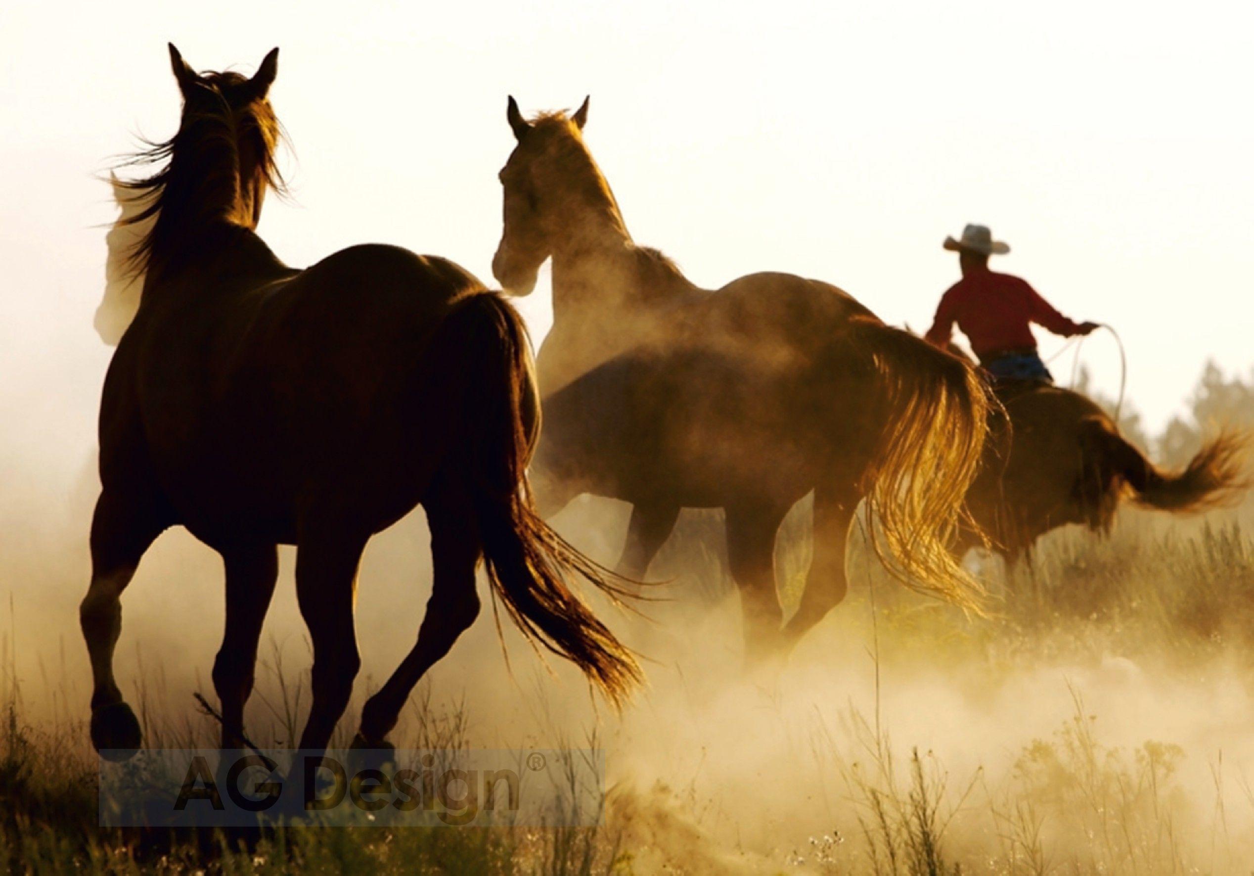 Fototapeta čtyřdílná - koně