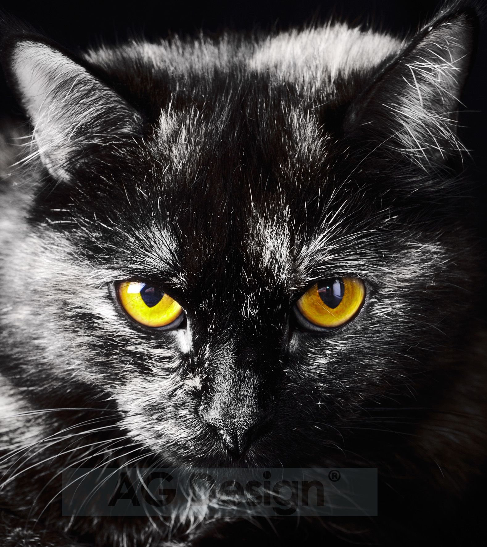 Fototapeta dvoudílná - kočka