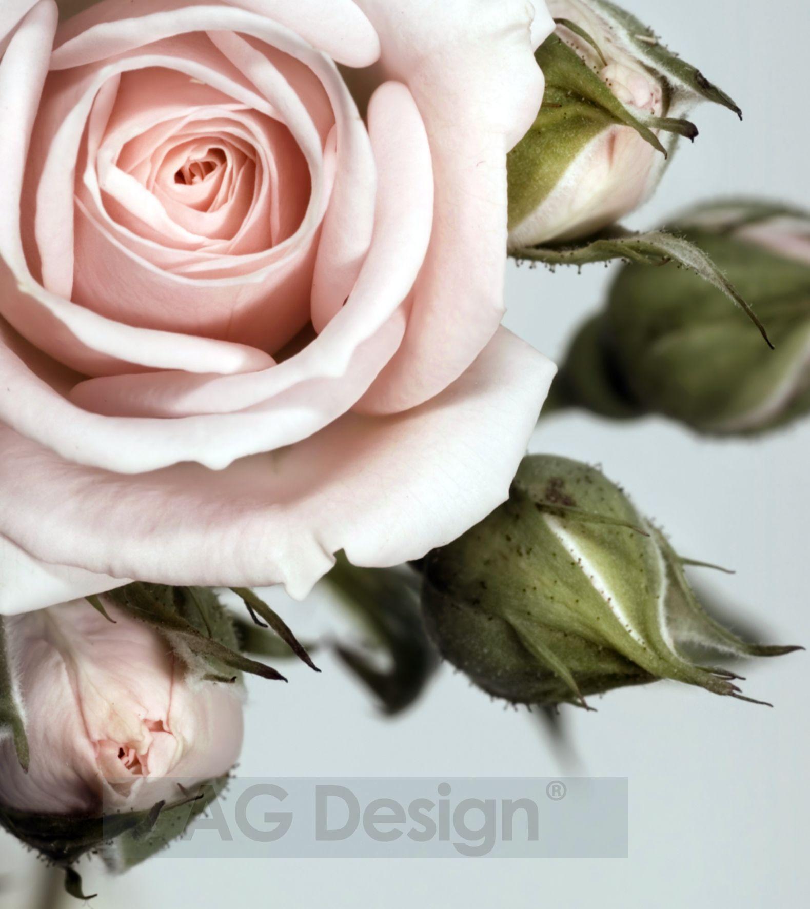Fototapeta dvoudílná - růže