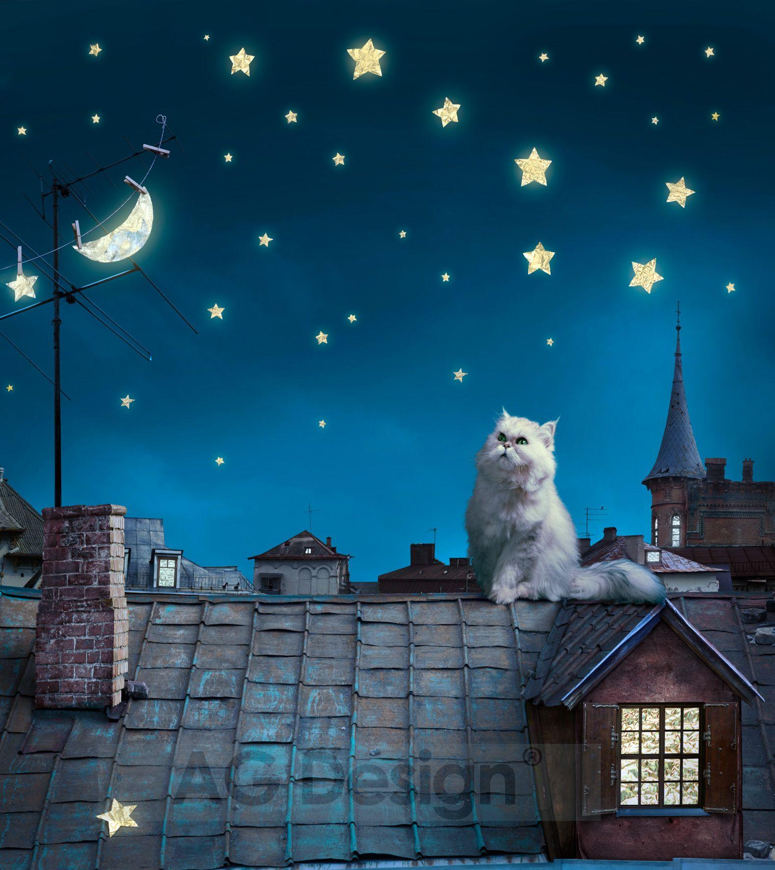 Fototapeta dvoudílná - kočka na střeše