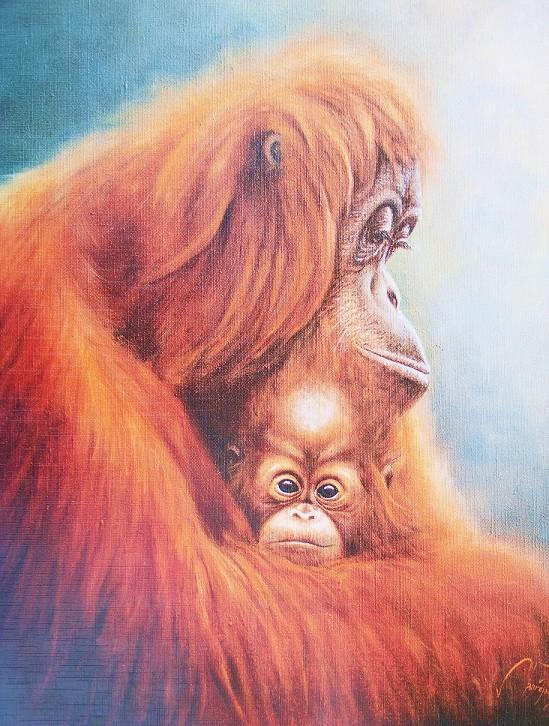 Obraz orangutanů